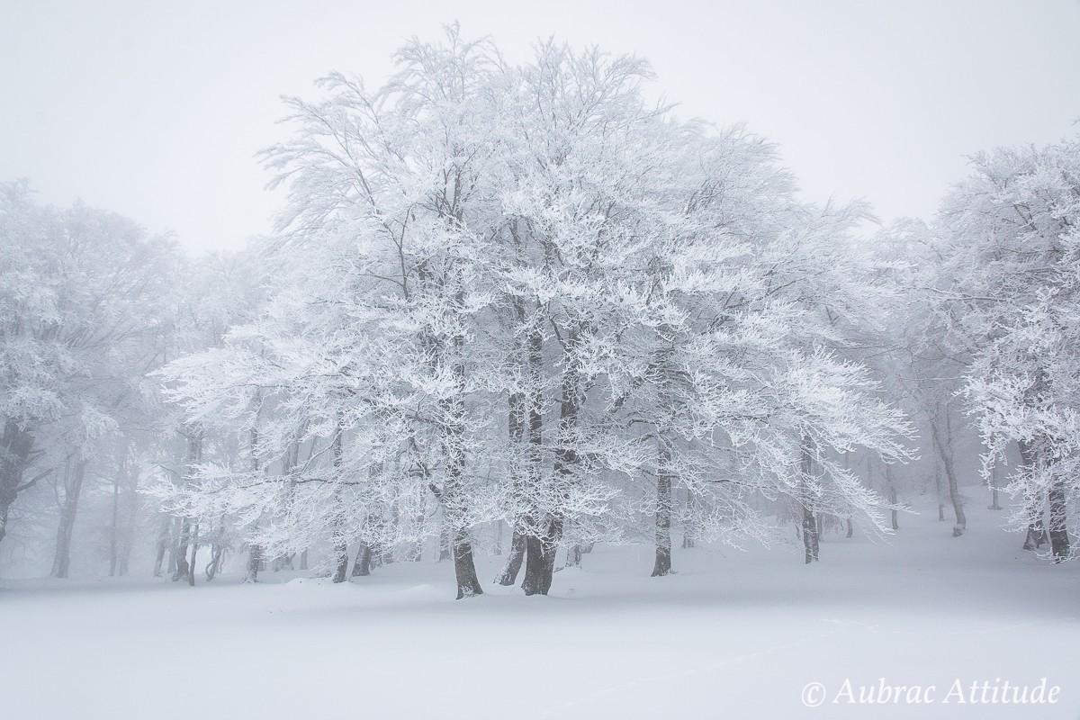 Balade dans la neige près de la station de ski de Laguiole