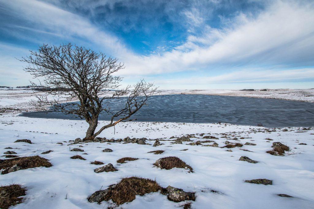 L'arbre du lac de Saint Andéol avec de la neige